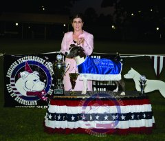 Best In Show - Grand Ch. Firewalk Influential Miss